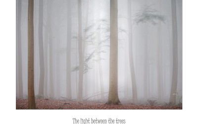 The light between the trees